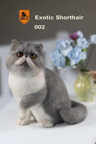Chat Exotic Shorthair (Gris)