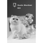 Chat Exotic Shorthair (Beige)