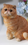 Chat Exotic Shorthair (Marron)