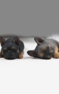 Set chiens French Bulldog (Gris)