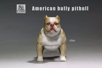 Chien American Bully Pitbull (Beige)