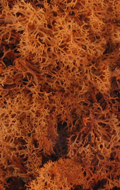 Texture végétation 40g (Orange)