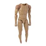Caucasian Male Body