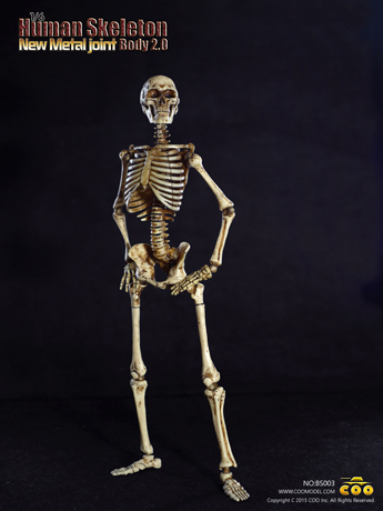 Human Skeleton Body 2.0