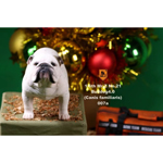 Set chiens British Bulldog 4.0 (Blanc)