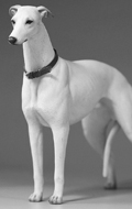 Greyhound Dog (White)