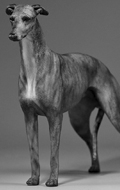 Greyhound Dog (Grey)