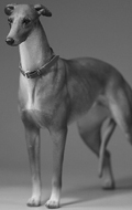 Greyhound Dog (Beige)