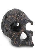 Codex Skull (Black)