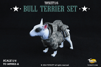 Chien Bull Terrier (Type A)