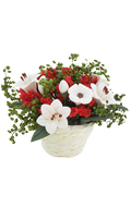 Pot fleurit (Rouge)
