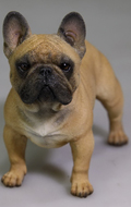 Chien French Bulldog (Marron)