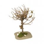 Arbuste seché (Beige)