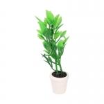 Plant (Green)