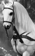 King Henry V Of England War Horse (White)