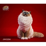 Chat Ragdoll (Marron)