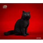 Chat British Shorthair (Noir)