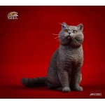 Chat British Shorthair (Gris)
