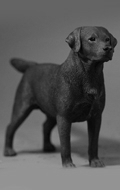 Chien Labrador Retriever (Marron)