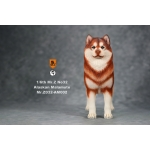 Chien Malamute d'Alaska (Orange)