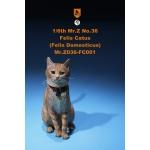 Felis Catus Domesticus Cat (Orange)