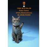 Felis Catus Domesticus Cat (Beige)