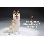 Siberian Husky Dog 2.0 (Beige)