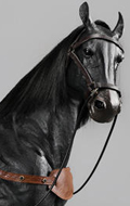 Horse with Accessories (Black)