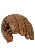 Main avec gant de baseball (Marron)